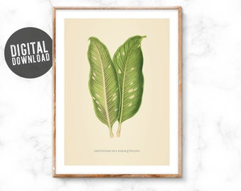 Displays Dieffenbachia baraquiniana, botanical, sheet, instant download, ready to print, large format available, wall decoration