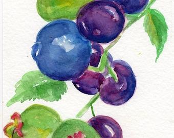 Blueberries Watercolor Painting original art 4 x  6 Fruit watercolor,  watercolor painting blueberries, blue kitchen decor Farmhouse Decor