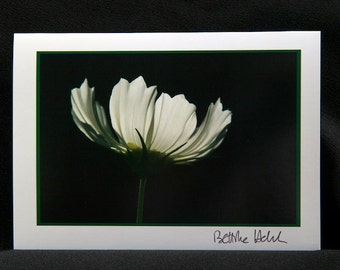 "Photo Greeting Card Cosmos Flower - Folded 5""x7"""