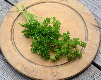Curled Parsley Seed, Heirloom Herb Garden, Host Plant for Butterfly Gardens, Curled Parsley Great for Container Gardens