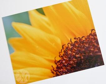 Photograph Print - Sunflower
