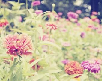 Zinnia Art Print - Flower Photography - Feminine and Whimsical Floral Nursery or Bedroom Home Decor Photo