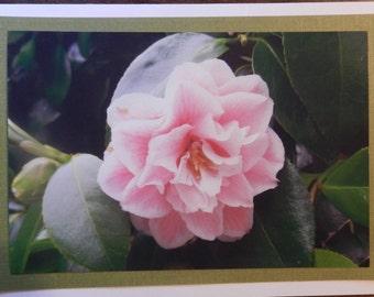 Blank Photo Greeting Card -