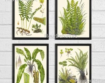 FERN Print SET of 4 Botanical Art Print 8X10 Lindman Antique Green Ferns Roots Chart Forest Summer Plant Nature to Frame Home Decor Garden