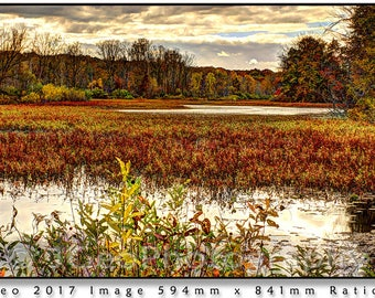 40 SHARON HOLLOW NEAR Another dynamic image in the wetlands of southern Michigan