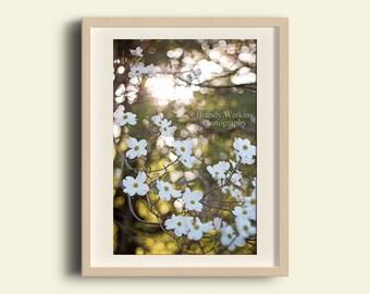 Dogwood tree blooms, dogwood decor, tree blooms, tree wall art, dogwood flower print, white flowers, nursery decor, floral nursery wall art
