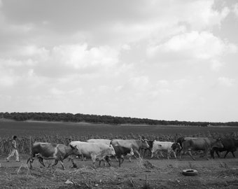Printable Wall Art Photography ,Israel Nature Landscape , Instant Download , B&W , HD