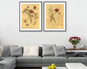 Dark red flowers print wall art decor gallery art botanical illustration SET OF 2 home office decor poster vintage illustrations posters