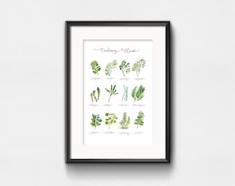 Impression d'Art culinaires herbes | Aquarelle de plantes | Infographie herbes graphique | Wall Decor | Lettrage à la main | 8 x 10 | 11 x 14 | 13 x 19