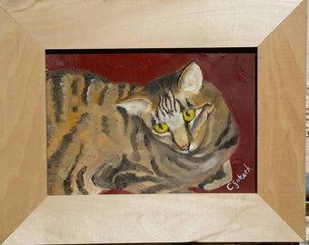 Sweet Little Tabby Cat