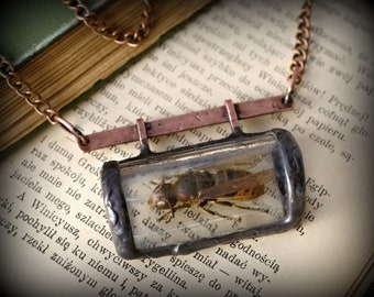 real hornet necklace, insect, terrarium necklace, OOAK, metalwork, primitive jewelry, handmade