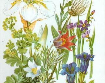 Vintage Botanical Print Antique FLOWERS, plant print botanical print, bookplate 35 art print, white blue purple plants plant wall