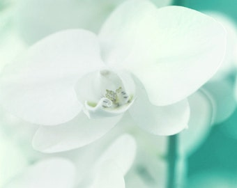 Orchid White Aqua Art Print - Flower Spring Summer Floral Soft Pastel Home Decor Wall Art Wedding Photograph