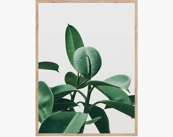 Rubber Plant Print, Large Leaf Art, Plant Picture, Digital Download, Digital Prints, Photography Print, Botanical Print, Instant Download