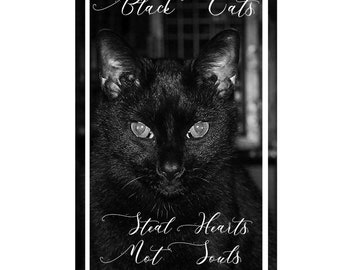 Black Cats Steal Hearts Not Souls