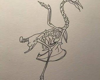 Bird Skeleton Drawing