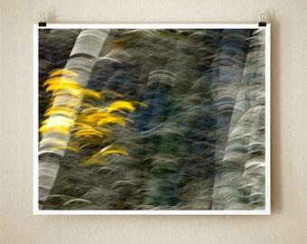 ASPEN DANCE - 8x10 Signed Fine Art Photograph