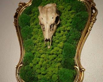 Baroque frame skull Moss/lichen #Back to Bones