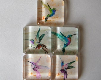 Fun Hummingbird Square Glass Tile Magnets Set of 5