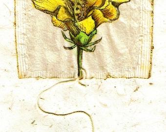 Ink Drawing on teabag 2, flower drawing,teabag art, floral art, spring floral, botanical, yellow flower, original art, original painting