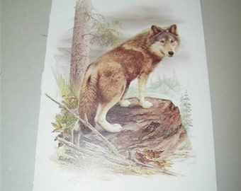 Wolf Print Severt Andrewson 11317 Scriptural Scripture