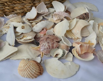 Lot of Broken Seashells, Sea urchins, Starfish and Sand Dollars for Craft Supply, Wedding Decor  (SP@)