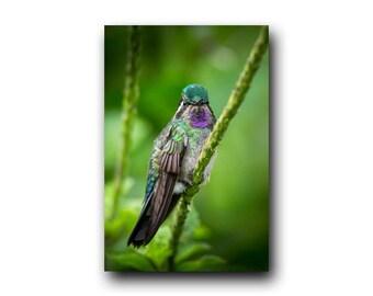 Hummingbird Photo, Hummingbird Print, Nature Print, Bird Picture, Bird Photography, Hummingbird Art, Angry Bird,Tiny Bird, Bird, Hummingbird