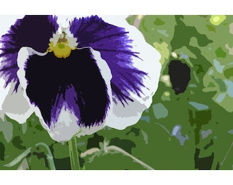 Pansy 1 - nature photography