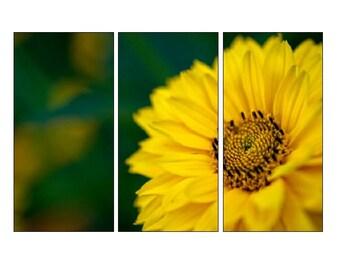 Yellow Daisy Triptych, Split Panel Art, Macro Photography, Unique Nature Canvas, Nursery Decor, Large Photo Canvas, Oversized Wall Art