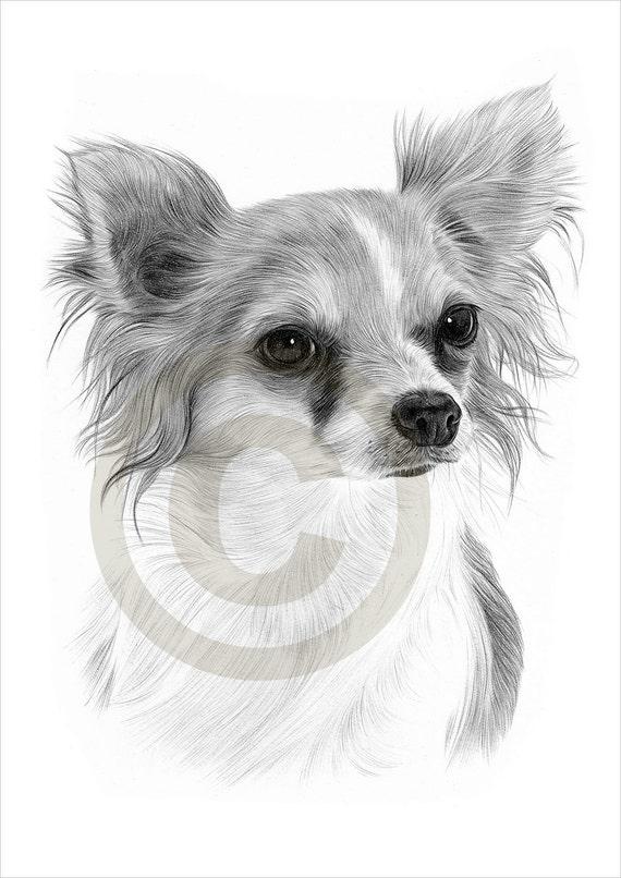 Dog Chihuahua Chiwawa Pencil Drawing Print A4 Size Artwork