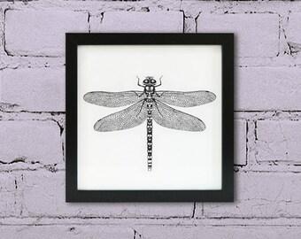 Framed Dragonfly print. Dragonfly wall art. Wildlife black ink art. Ink dragonfly drawing. Hawker Dragonfly art frame.