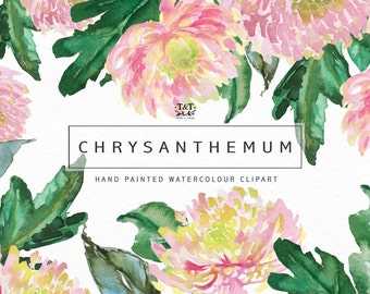 Watercolor Flower Clip Art Collection - Hand Painted Graphics. Chrysanthemum watercolor florals. Great as wedding clipart, on cards, etc.