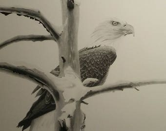 Bald Eagle Print Of Original Pencil Drawing