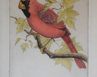 vintage colored etching of male cardinal signed Benson Moore