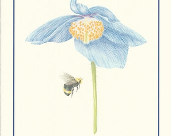Set of 4 Himalayan Blue Poppy with Bumble Bee Cards