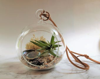 Air plant terrarium kit with shells; unique gift; tillandsia; air plant;terrarium;office decor;housewarming gift