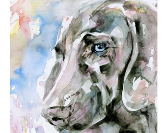 Blue Eyes... Weimaraner Dog art archival print from original painting by Kathy Morton Stanion EBSQ
