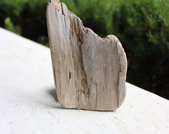 Natural Art Supply , Driftwood for Painting , Surf Tumbled Drift Wood