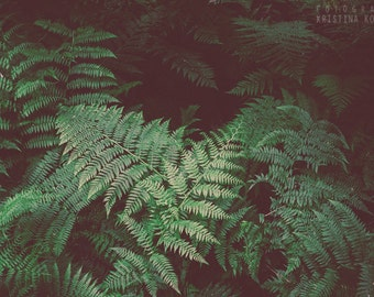 FERN photography print, woodland nature scene, 8x12