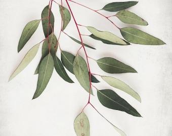 Botanical Print, Eucalyptus Leaves, Large Wall Art, Nature Print, Neutral Wall Art, Minimal Art, Rustic Modern, Sage Green Wall Art