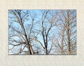 Tree Photography, Nature Photography, Fine Art Print, Naked Trees, Trees in Winter, Nature Art, Art for Office, Art for Earth, Tennessee