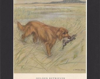 Golden Retriever Print George Vernon Stokes 1947 Drawing Mounted with Black Mat Vintage Dog Print Retriever Dog Print Gold Retriever Picture