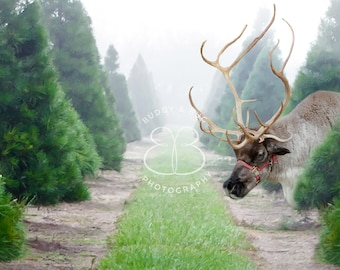 Christmas Tree Farm Reindeer Digital Background