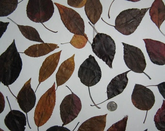 Natural Organic Dried Autumn Leaves, Fall Leaves, Supplies for Arts, Crafts, Home Decor, Various Sizes