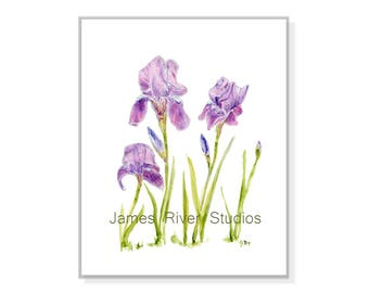 Iris Print Iris Art Iris Painting Iris Watercolor Iris Wall Art Iris Wall Decor Iris Poster Iris Large Print Blue Iris Purple Irises Print.
