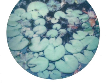 Lily Pads 014