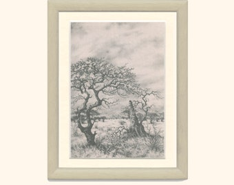 Worm-bark Tree, False-thorn Tree, Worm Cure, Shrub Savanna South Africa, Pencil Drawing, EB/1977/36, Frameable Vintage Print