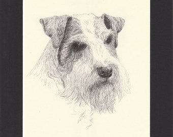 Sealyham Terrier Vintage Dog Print by C.Francis Wardle - 1935 Print of Drawing, Mounted with Mat