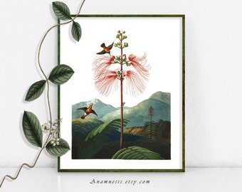 MOUNTAIN HUMMINGBIRDS - digital download - frameworthy printable bird illustration for prints, totes, cards, scrapbooking, clothes etc.