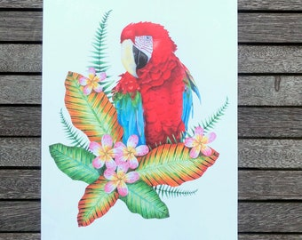 A Scarlet Macaw Watercolour A4 Print